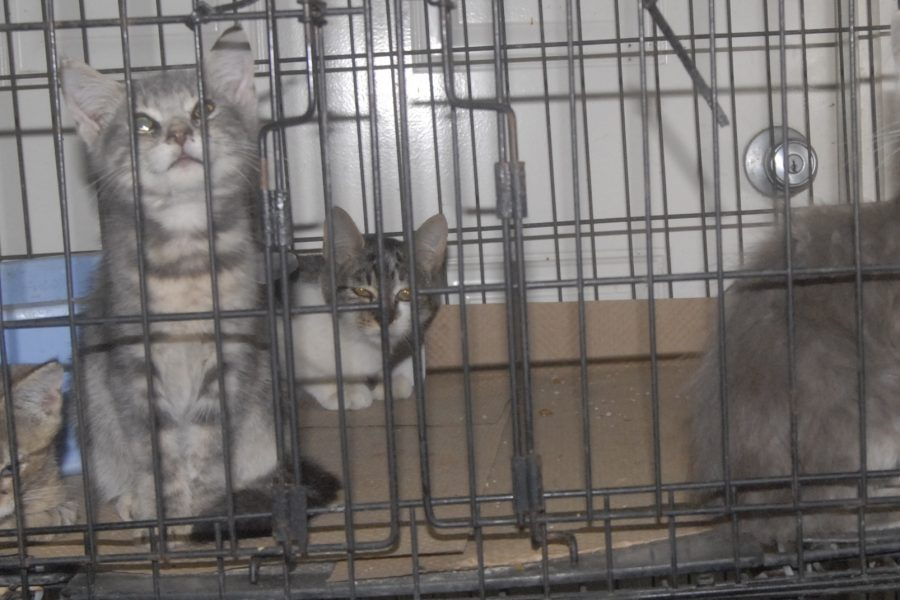 Some of the kittens seized from a hoarding case in Columbus County.